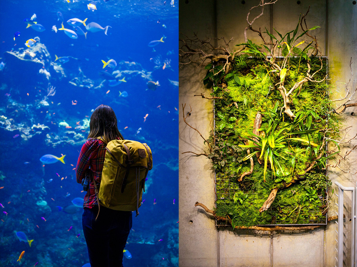 Aquarium and Rainforest in the California Academy of Sciences